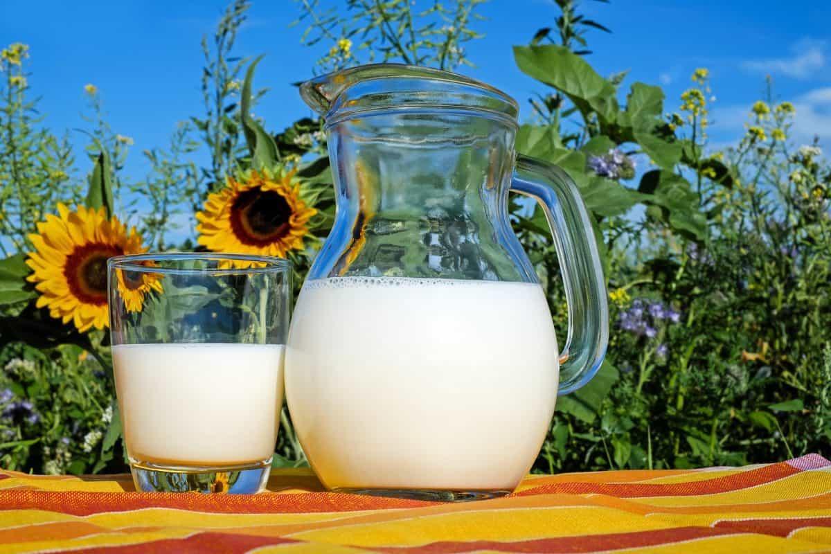 milk-2474993_1920-1200x800.jpg
